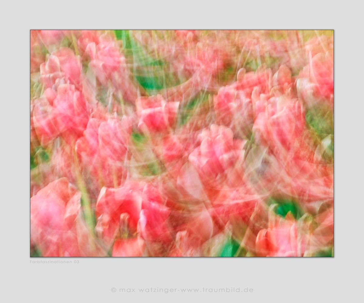 Blume-03