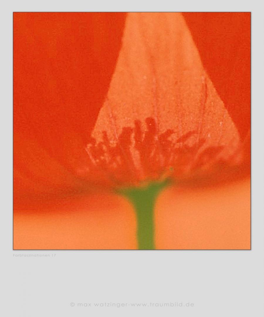 Blume-17