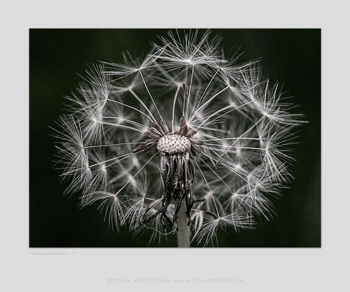 Blume-19