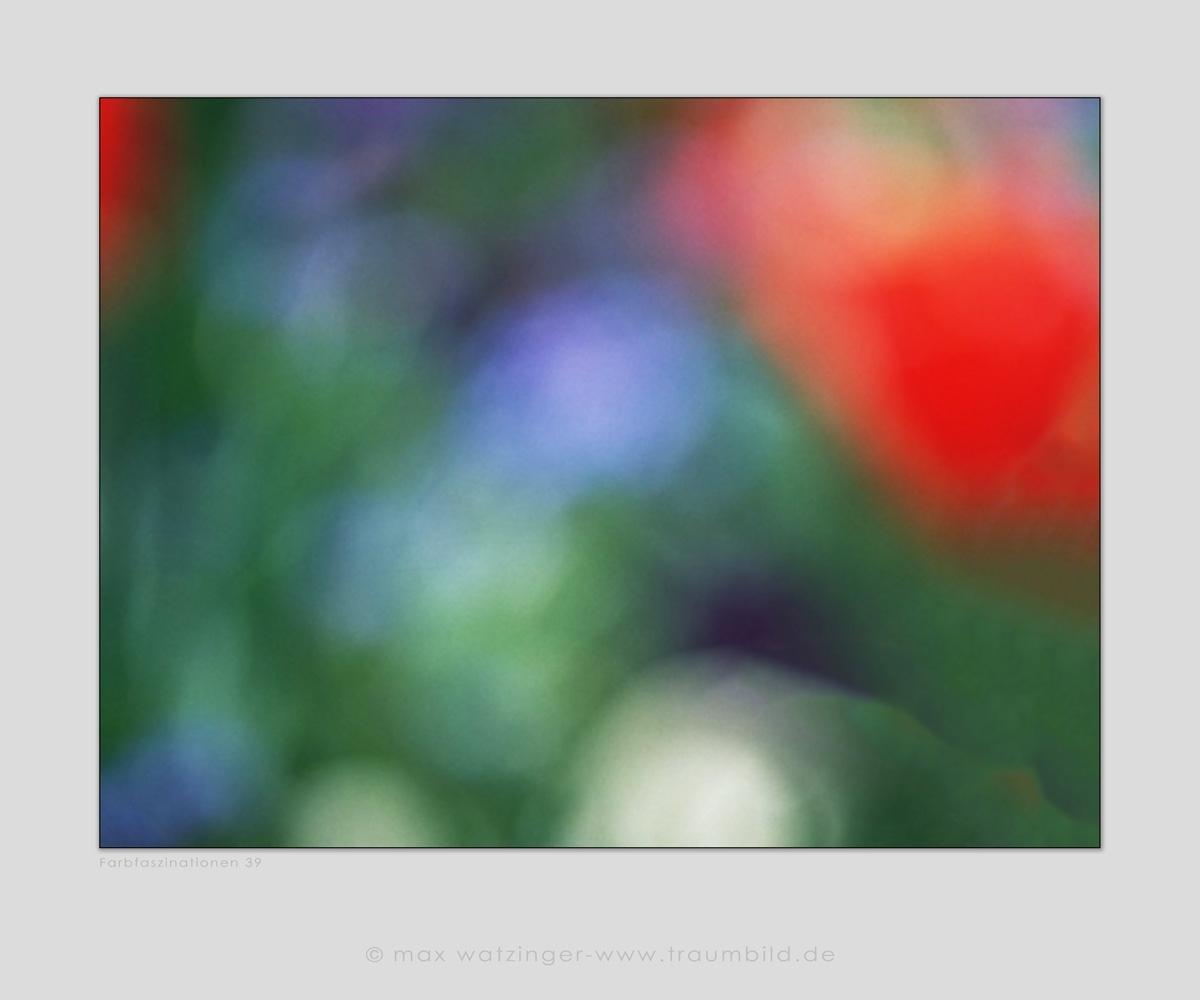 Blume-39