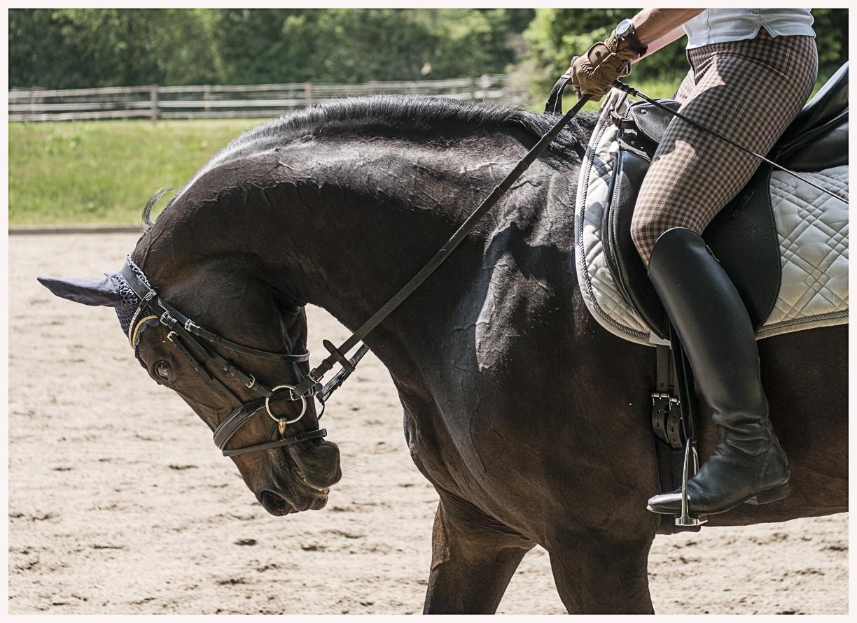 007-Pferd-040617