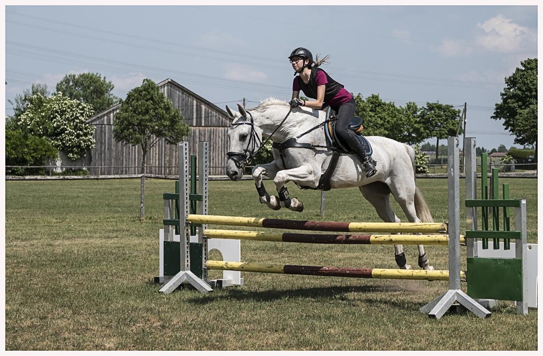040-Pferd-040617