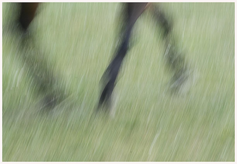 065-Pferd-040617