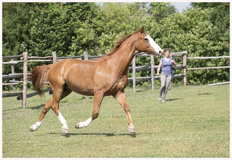 086-Pferd-040617