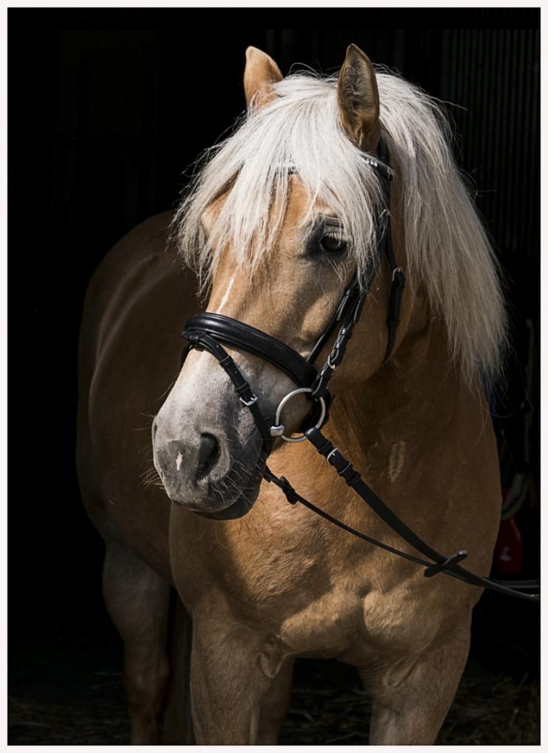 103-Pferd-040617