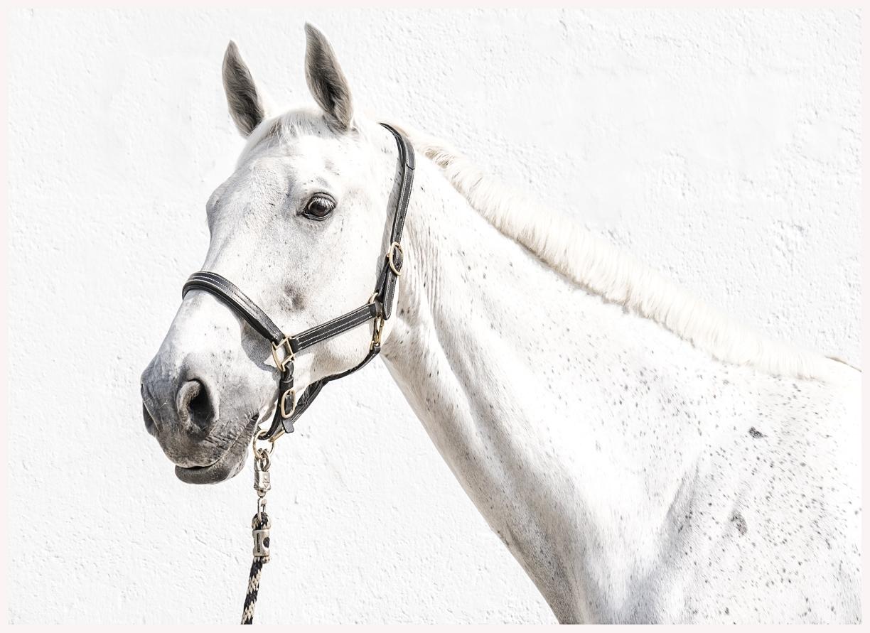 144-Pferd-040617