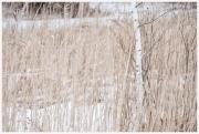 06-Winter-100218