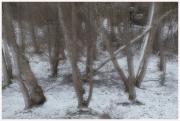 25-Winter-100218